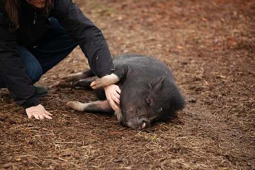 pig woman holding black pig hog
