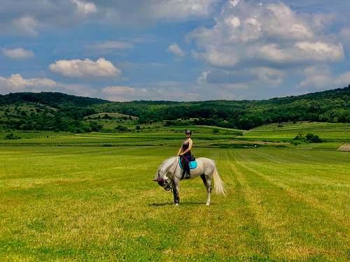 horse woman riding white horse on grassland during daytime mammal