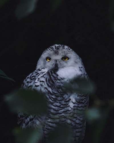 animal gray and white owl on tree owl