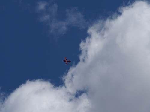 animal red plane overhead flying