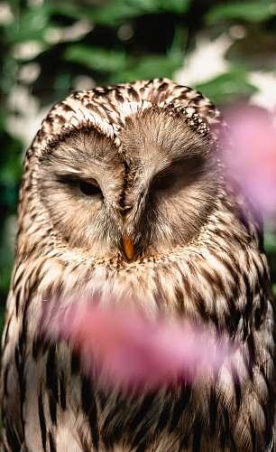 animal selected focus photo of brown owl beak