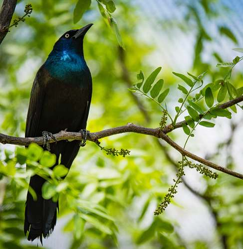 animal selective focus photography of black and blue bird on tree branch nature