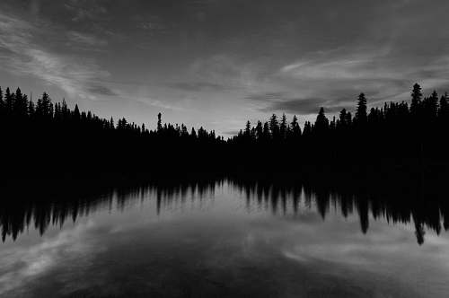 forest body of water near trees under cloudy sky reflection