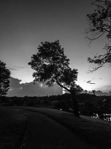 silhouette greyscale photography of trees plant