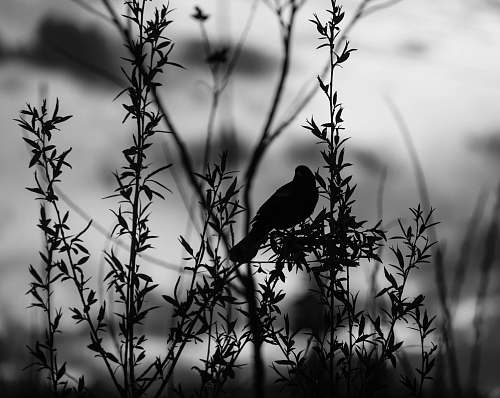animal silhouette of bird bird