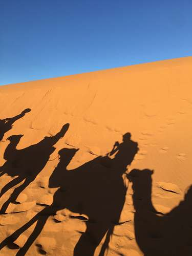 nature silhouette of four person riding camel on desert during daytime outdoors