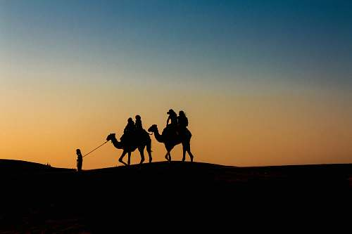 nature silhouette of people riding camels soil