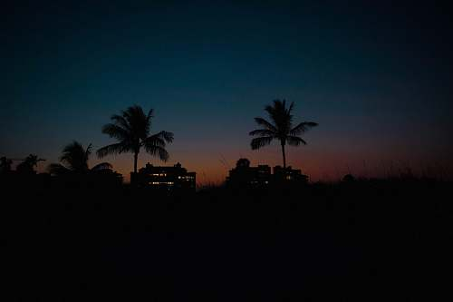 nature silhouette photography of coconut trees outdoors
