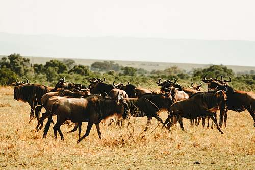 nature herd of animal grassland