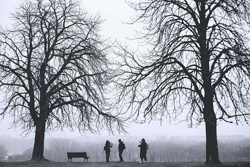 tree silhouette of three person standing between leafless trees at daytime park bench