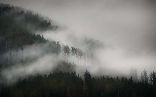 fog trees with fog pfunds