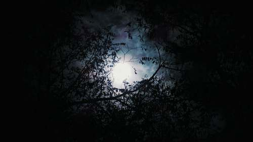 photo halloween silhouette of tree with full moon background dark free for commercial use images