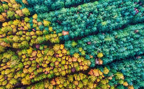 outdoors aerial photography of forest with trees sea