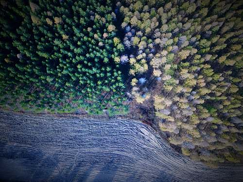 ocean aerial photography of green and brown trees during daytime outdoors