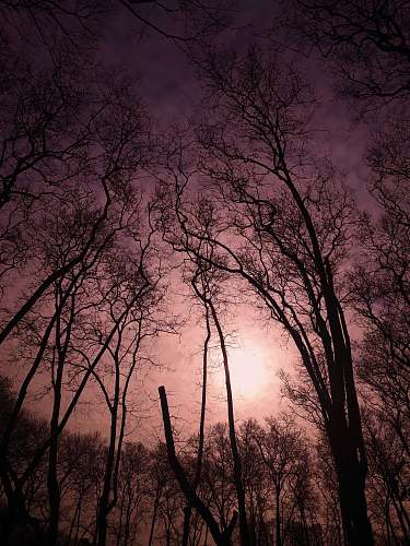 outdoors beige sky over leafless trees at sunset tree