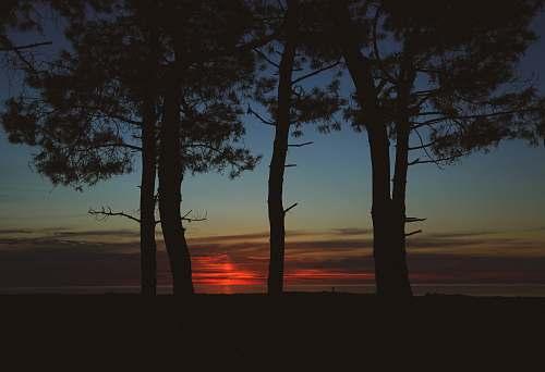 sky five trees sunset