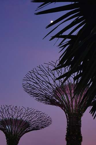silhouette Gardens at the Bay outdoors