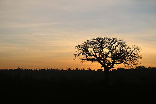 outdoors leafless tree dawn