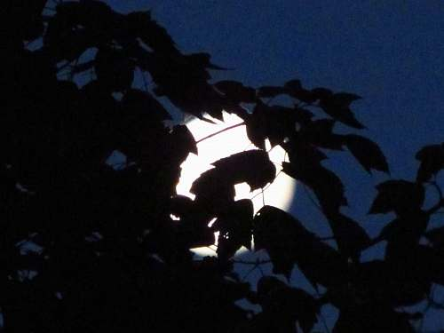 flare leaves under the moon during nighttime light