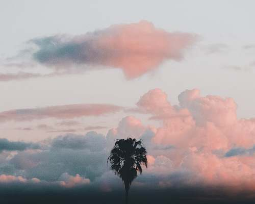 cloud palm tree and clouds scenery photography sky