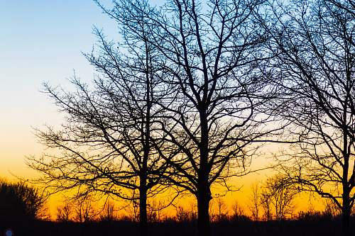 sky silhouette of bare trees during golden hour outdoors