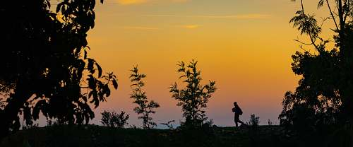 person silhouette of person and trees during golden hour human