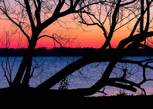 outdoors silhouette of tree near body of water during sunset dawn