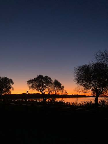 outdoors silhouette of trees near body of water dawn