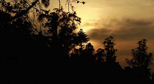 sunset silhouette of trees outdoors