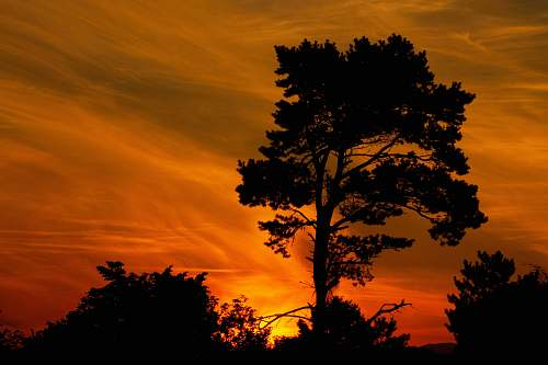 sunset silhouette of trees under orange skies outdoors