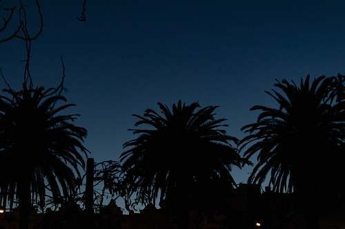 outdoors silhouette photo of palm trees night