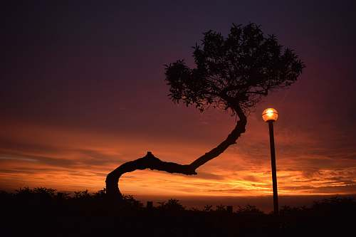 silhouette silhouette photography of tree and post lamp during golden hour outdoors