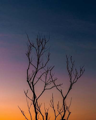 outdoors silhouette photography of tree during dawn dawn