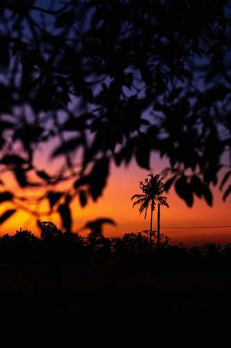outdoors tree leaves under golden hour dusk