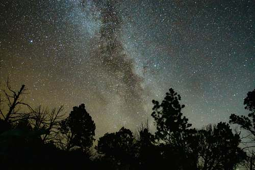 photo galaxy silhouette of trees under starry sky milky way free for commercial use images