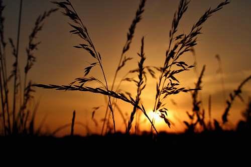 nature grass at sunset sky