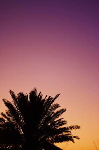 nature silhouette of palm tree sky