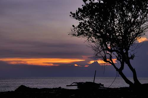 nature silhouette of tree and boat across body of water dawn