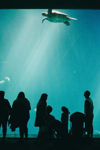 water people looking at turtle swimming inside dome water museum aquarium