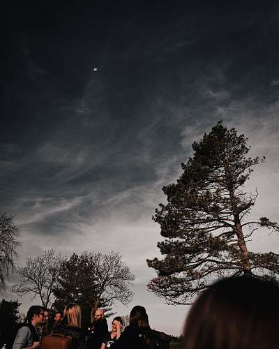 human group of people gathering near tall trees during night time nature