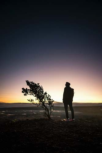 human silhouette of man standing beside tree during sunset people