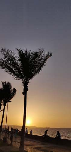 human silhouette photo of lined palm trees near sitting people at golden hour nature