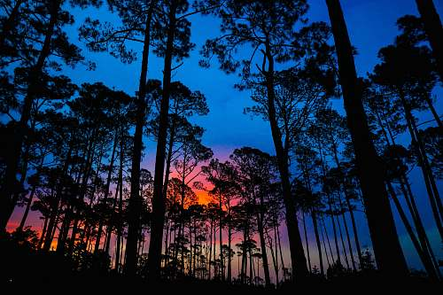 vegetation silhouette of trees during golden hour nature