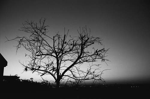 black-and-white grayscale photography of leafless tree tree