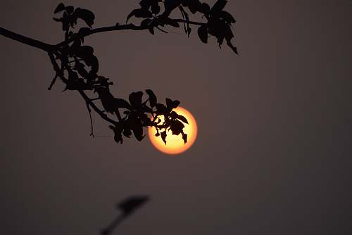 nature leaves overlooking moon outdoors