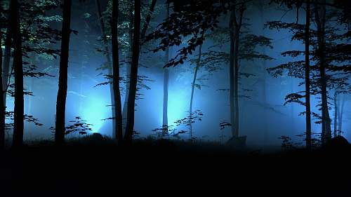 nature lined trees during nighttime outdoors