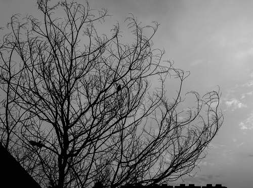 nature low angle photo leafless trees black-and-white