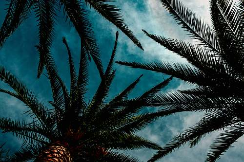 nature low angle photography of green palm trees during daytime outdoors