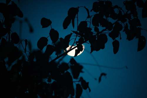 nature macro photography of silhouette of plants outdoors