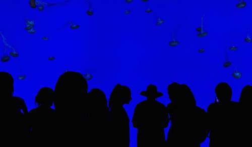photo people people silhouettes with blue background blue free for commercial use images